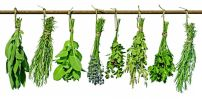 tuscookany_blog_post_about_italian_herbs_45