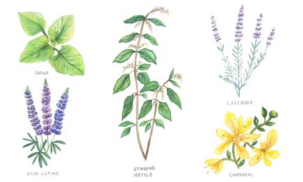 Herbs-Header-GB